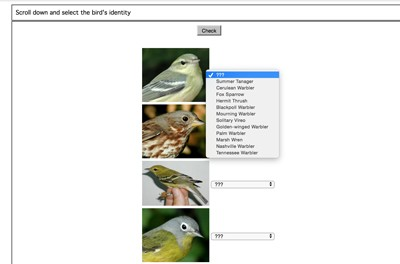 Mr  Nussbaum - North American Bird Identification Quiz - Basic