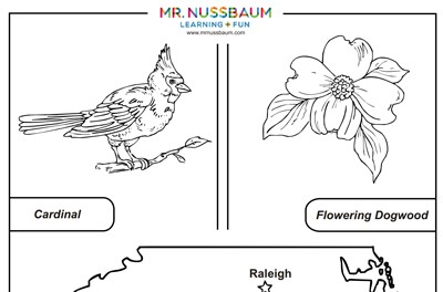 Massachusetts State Tree coloring page | Free Printable Coloring Pages | 264x400