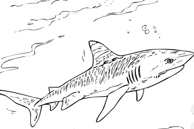 Wobbegong Shark coloring page | Free Printable Coloring Pages | 267x400