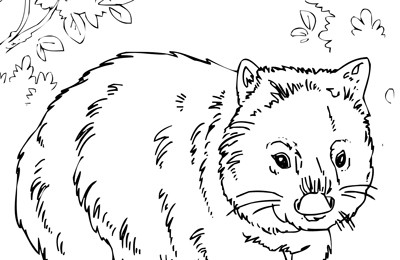 Animals Habitat Scenes Colouring Pages (teacher made)   260x400