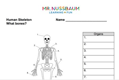 graphic about Printable Human Skeleton named Mr. Nussbaum - Human Skeleton Printable Quiz