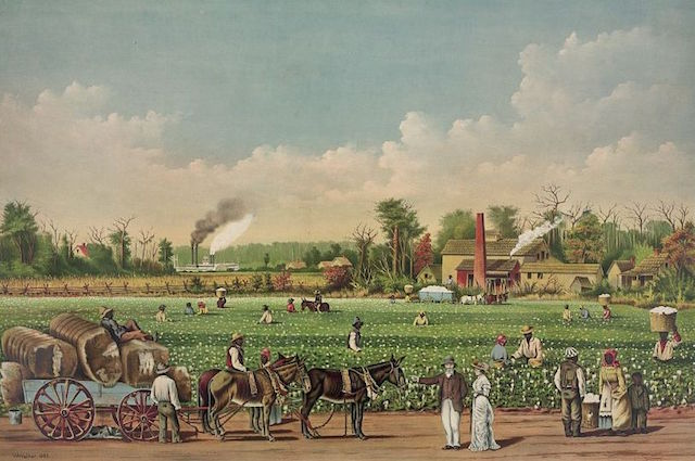 Cotton Plantation in Mississippi