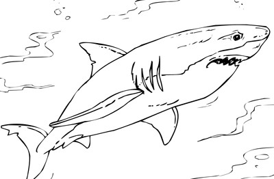 Mr. Nussbaum - Nurse Shark - Sharks Coloring